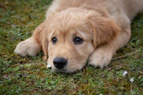dog thunderstorm anxiety treatment