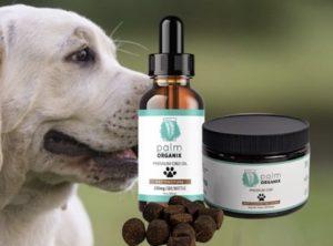 cbd dog products
