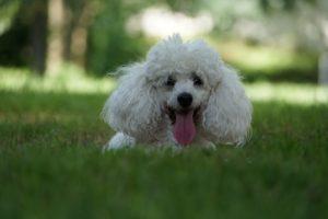 cbd dog treats 7