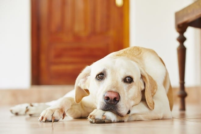 dog separation anxiety solutions featured