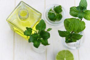 CBD Mint Tincture Pesto Recipe